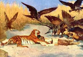Тигр людоед (В.В. Верещагин)